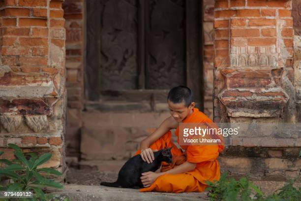 Asian little monk playing with a cat at temple