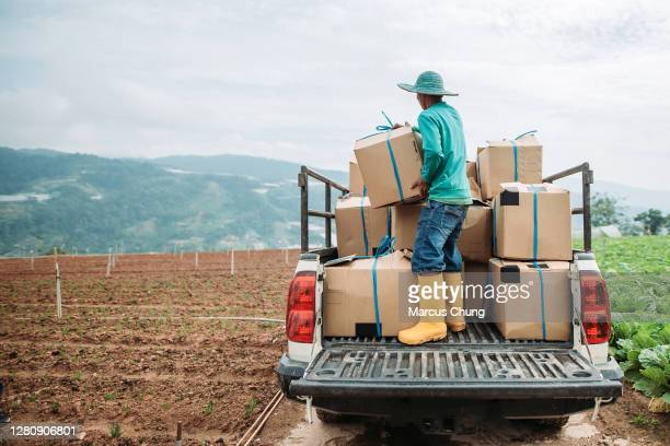 asian male farmer loading freshly harvested goods onto pick-up truck at cabbage fields - agricultural occupation stock pictures, royalty-free photos & images
