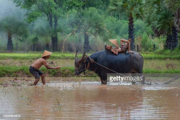 Asian man splash water to his son and buffalo