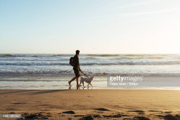 asian man with dog walking on beach against clear sky, foster city, united states - images stock pictures, royalty-free photos & images
