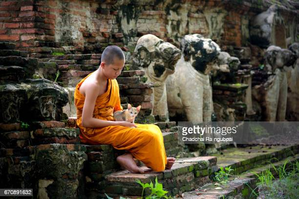 Asian monk sitting with cat at thai traditional temple of ayutthaya thailand.