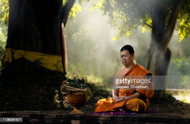 asian monks meditation tree in temple  lighting.the monks were meditating to train the mind to calm the light streaming through trees in the daytime. - monk stock pictures, royalty-free photos & images
