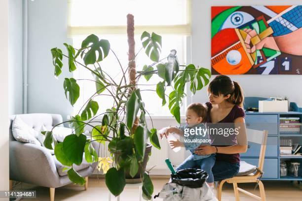 asiatische mutter und sohn pflegen pflanzen - fensterblatt aroid stock-fotos und bilder