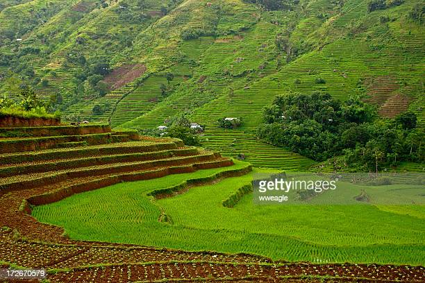 Asian Rice Terraces