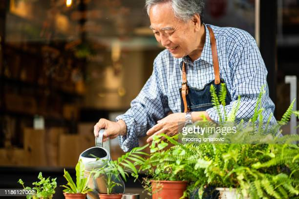aziatische senior man het verzorgen van planten - bedektzadigen stockfoto's en -beelden