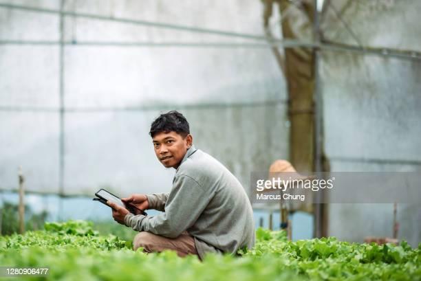 agricoltore maschio sorridente asiatico che usa tablet digitale in serra - maniche lunghe foto e immagini stock
