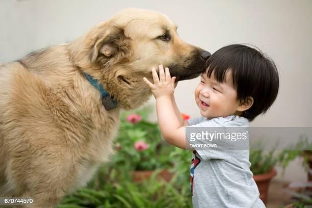 asian toddler avoiding dog sniffing on him. - cão adestrado - fotografias e filmes do acervo