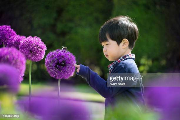 asian toddler boy looking at a bee on flower. - insect stock pictures, royalty-free photos & images