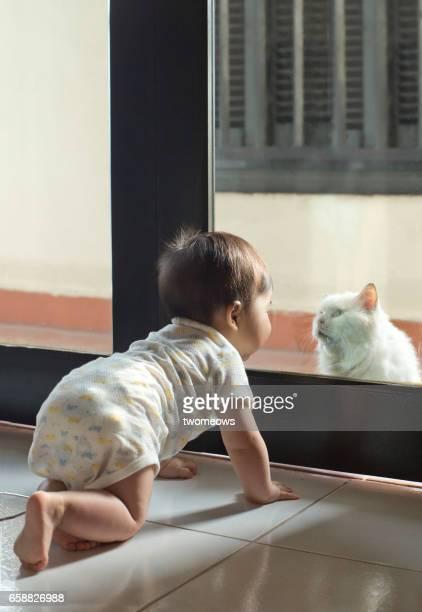 Asian toddler boy looking at a cat.