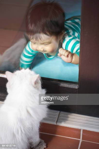 Asian toddler boy looking at a cat through window.