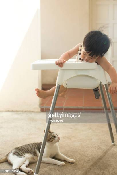Asian toddler curiously looking at a stray cat.