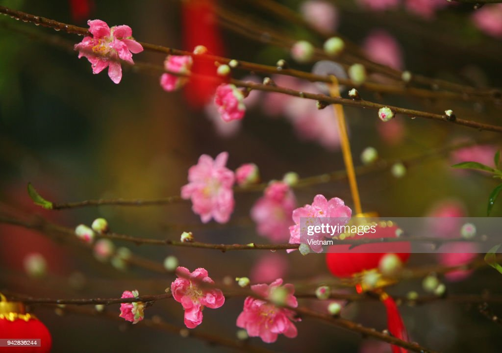 Asian traditions on lunar new year : Stock Photo