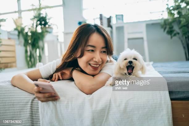 aziatische vrouw thuis met puppy - neus van een dier stockfoto's en -beelden