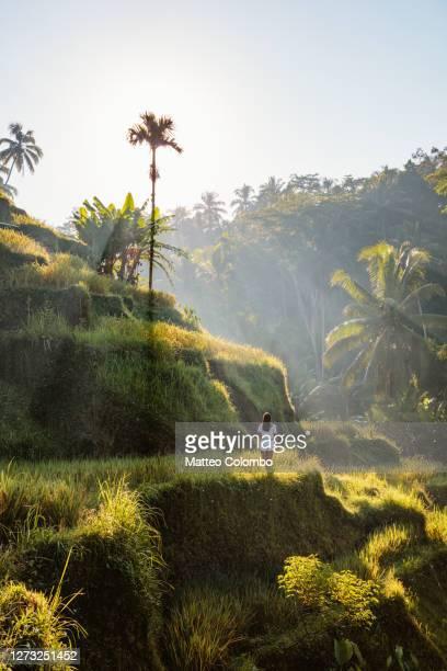 asian woman at the rice terraces, bali, indonesia - rice terrace stockfoto's en -beelden