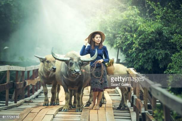asian woman farmer with a buffalo - pretty vietnamese women stock photos and pictures