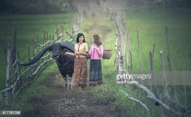 asian woman farmer with a buffalo - oxen stock photos and pictures