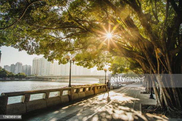 asian woman jogging along the riverside - city life stock pictures, royalty-free photos & images