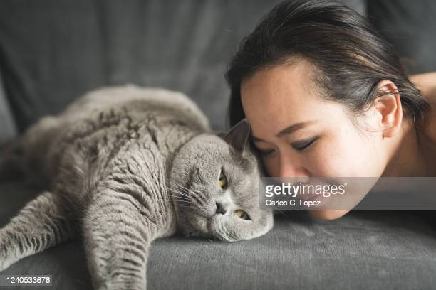 asian woman lying down on sofa kissing a british short hair cat - british shorthair cat stock pictures, royalty-free photos & images