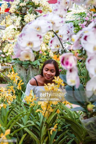 asian woman surrounded by orchids, chiang mai, thailand - botanical garden stock pictures, royalty-free photos & images