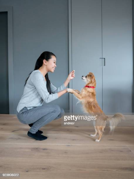 asian woman training her dog at home - long haired chihuahua stock photos and pictures