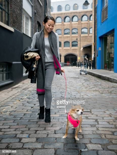 asian woman walking her dog outdoors on the street - long haired chihuahua stock photos and pictures