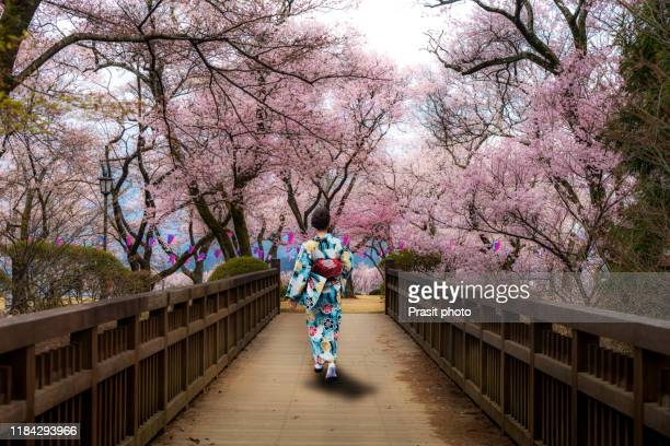 asian women wearing traditional japanese kimono walking in flower garden with cherry blossom  in background in spring season in kyoto, japan. woman walking to sightseeing in japan. - japan stock pictures, royalty-free photos & images