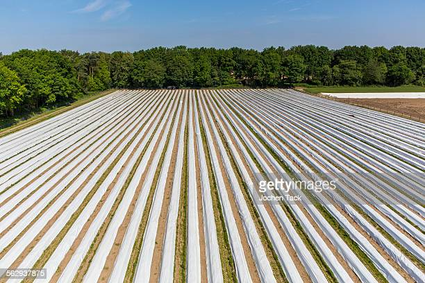 Asparagus field, asparagus dams, covered with plastic sheets, Walbeck, Niederrhein or Lower Rhine region, North Rhine-Westphalia, Germany