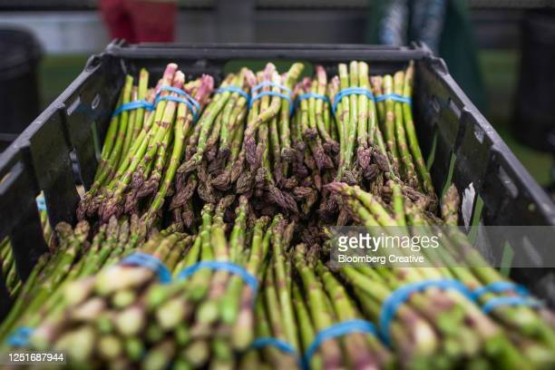 asparagus harvest - differential focus stock pictures, royalty-free photos & images