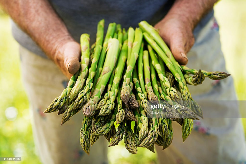 Asparagus in hands of a farmer : Stock Photo