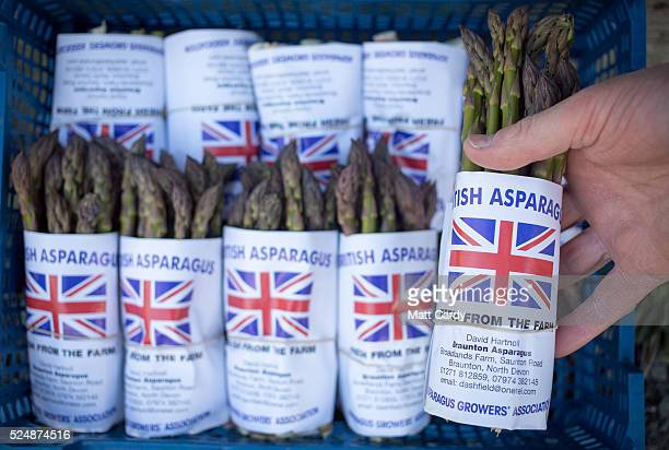 Asparagus picked by hand from a field at Broadlands Farm is packed for dispatch near Braunton on April 27 2016 in Devon England Generally a spring...