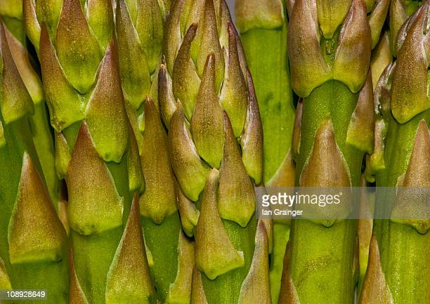 asparagus - ian grainger stock pictures, royalty-free photos & images