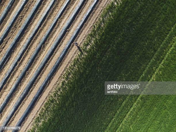lignes de plantation d'asperges dans la vue aérienne et une personne marchant entre eux. - un seul homme photos et images de collection