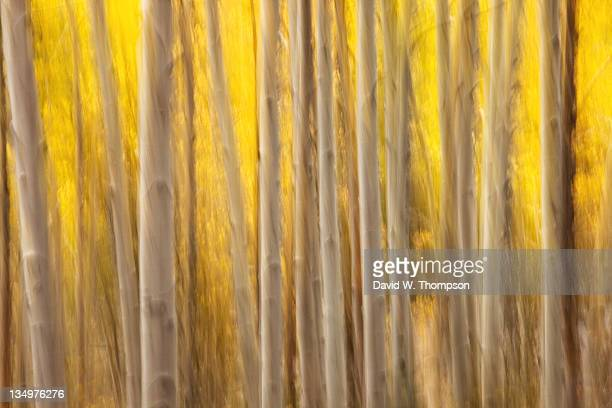 aspen fall forest woods - mt charleston stock photos and pictures