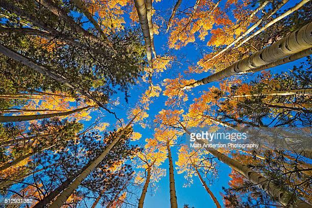 Aspen Glow Fall Colors