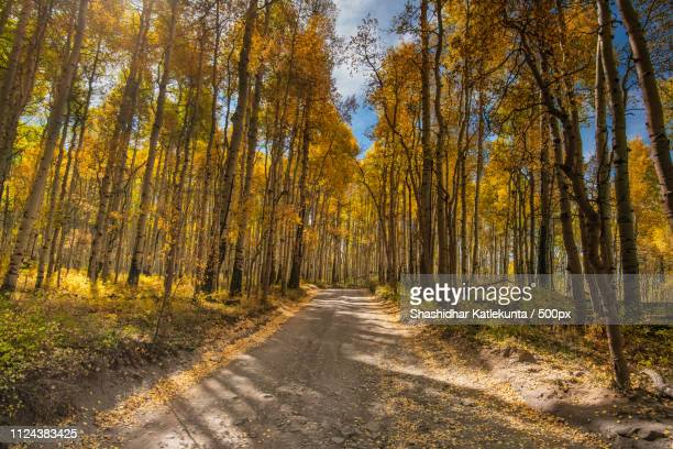 aspen groves - last dollar road - last stock pictures, royalty-free photos & images