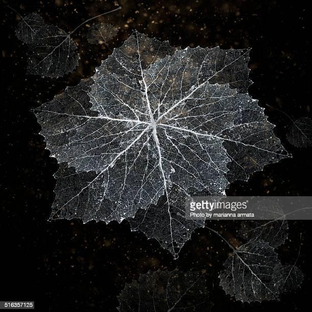 Aspen lace snowflake