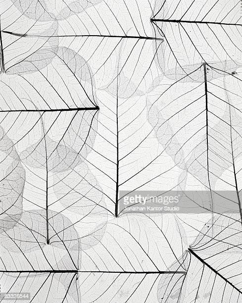 aspen leaves - populier stockfoto's en -beelden
