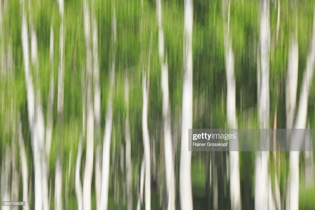 Aspen near Highway UT-12 (blurred) : Stock-Foto