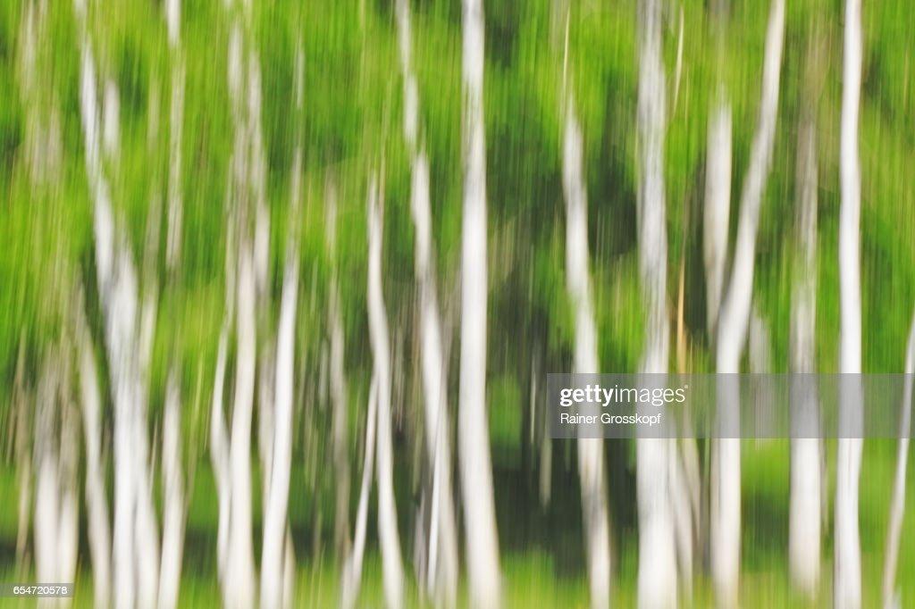 Aspen near Highway UT-12 (blurred) : Stock-Foto