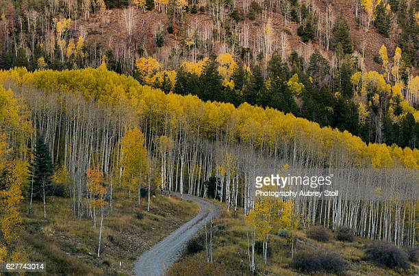 aspen slopes - mt wilson colorado stock photos and pictures