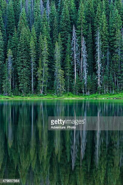 aspen trees reflecting in mountain lake - gore range stock photos and pictures