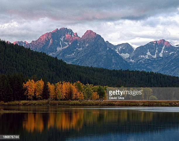 Aspen turning color reflected in the Snake River, Grand Teton National Park with the Tetons in the background