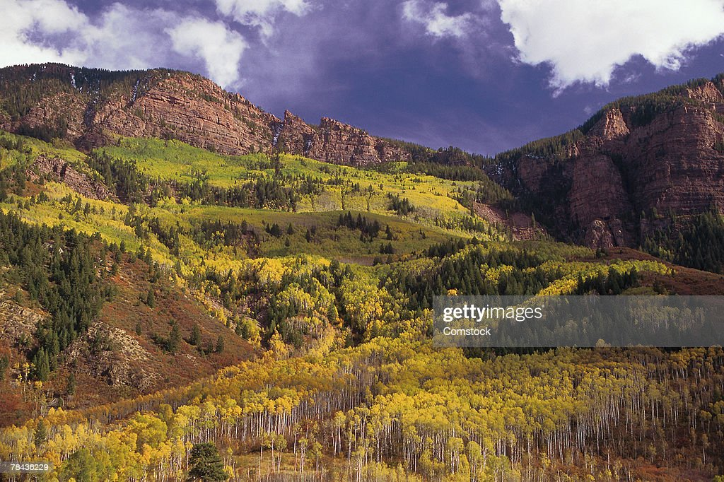 Aspens and evergreens in autumn on mountainside : Stockfoto