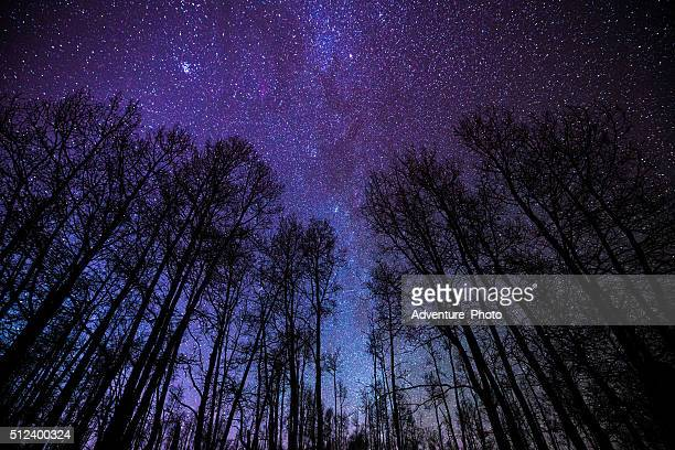 aspens and milky way night landscape - aspen colorado stock photos and pictures