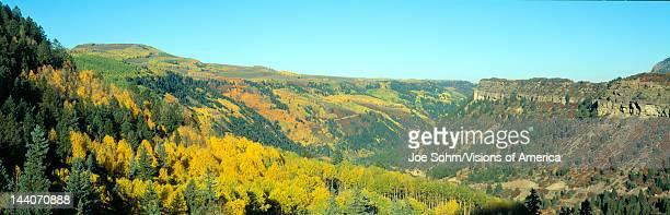 Aspens in Autumn near Cortez, Colorado
