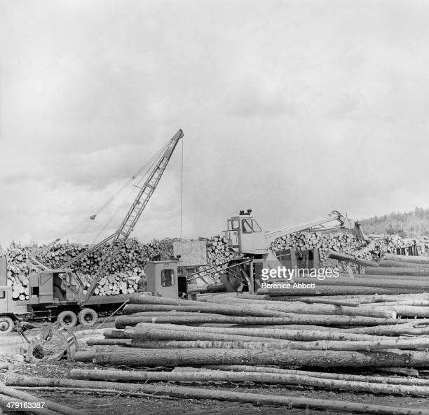 Assembling cord wood for river transport United States circa 1950 Abbott took two series of logging photographs the first in the High Sierra...