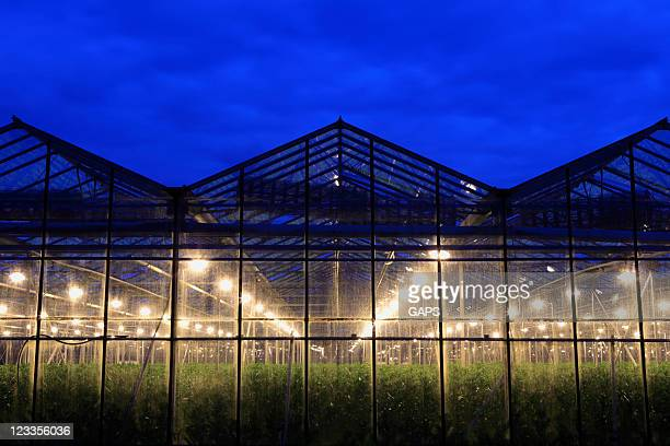 assimilation lights in a greenhouse - illuminated stock pictures, royalty-free photos & images