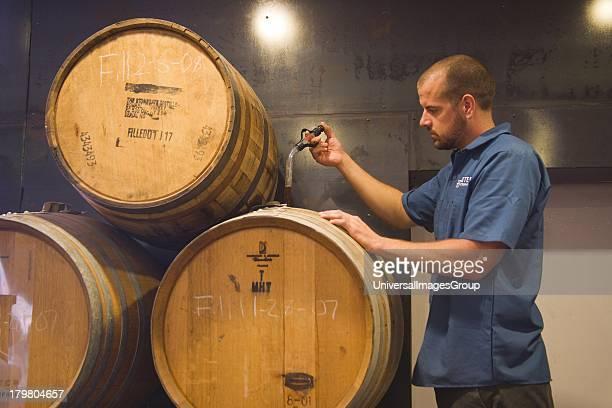 Assistant brewer Tim Maddox checks beer aging in oak bourbon barrels Hollister Brewing Company Goleta California