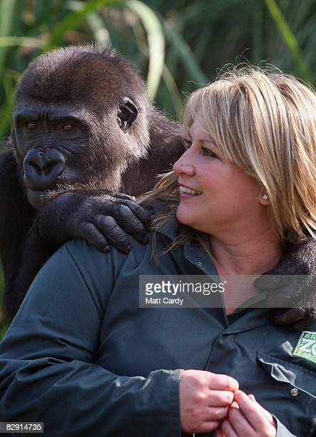 Assistant curator of mammals Mel Gage welcomes Bristol Zoo's latest arrival a young orphan gorilla on September 19 2008 in Bristol England The...