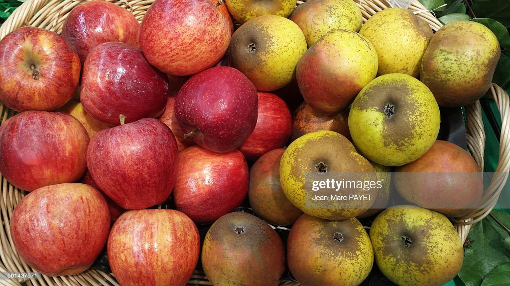 Assorted apples in a wicker basket : Photo